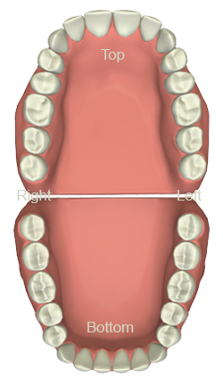 Dental Tooth Chart West Palm Beach - Teeth Set